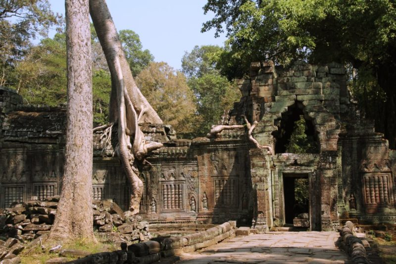 Ta Prohm, Lara Croft Tempel, Tomb Raider Tempel, Angkor Wat, Ruinen im Dschungel