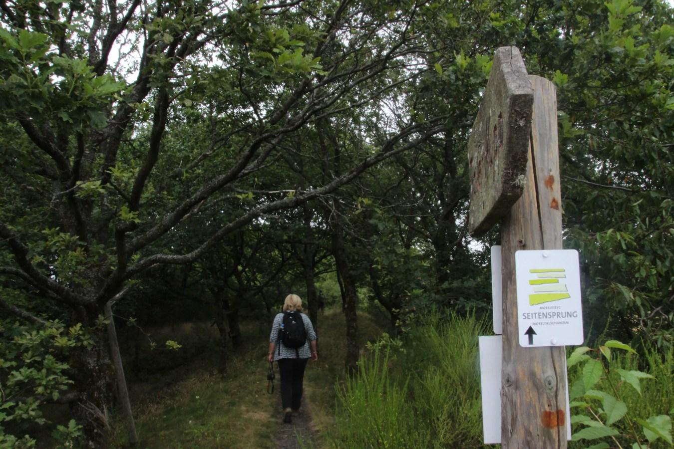 Wanderweg in Traben-Trarbach, Wandern in der Umgebung von Bernkastel-Kues