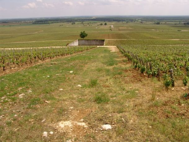 Clos de La Roche - heavy drainage can be required