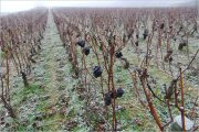 good-bye white burgundy & drc 'control-freaks'…