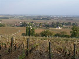 Looking down on Aloxe-Corton from Les Languettes