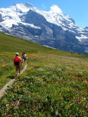 The Jungfrau (and flowers)
