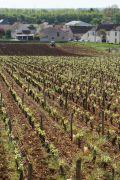 a new owner of the nsg clos des grandes vignes…