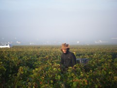 Porteur-in-Bourgogne-Rouge-claggy-mist-obscuring-Morey-behind