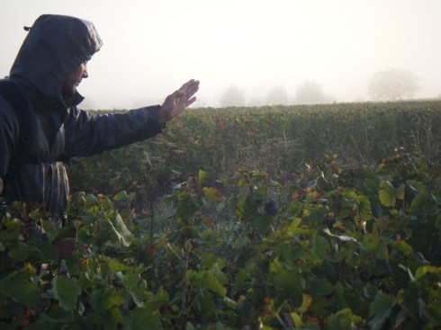 Romain-Arlaud-in-Bourgogne-Rouge-claggy-brouillard