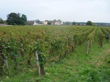 Domaine-G-Roumiers-Morey-1er-Clos-de-la-Bussiere-abuts-Arlauds-Morey-1er-Ruchots