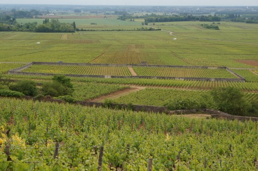 Clos des Perrièes is the walled vines...
