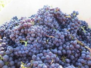 Roumier Morey Bussiere fruit