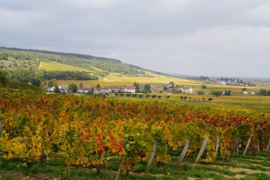 Across Musigny to Chambolle