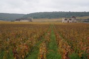 Autumnal Clos de Vougeot...