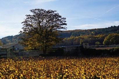 Chassagne Villages...