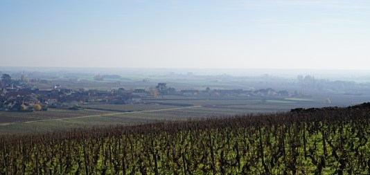 The edge of Meursault with the vines heading out towards Puligny