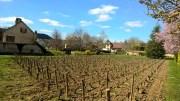 a sunday stroll in (mainly) meursault…