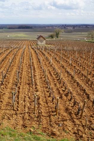 Savigny-lès-Beaune Les Vergelesses