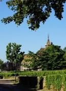 mid-july burgundy vineyard update