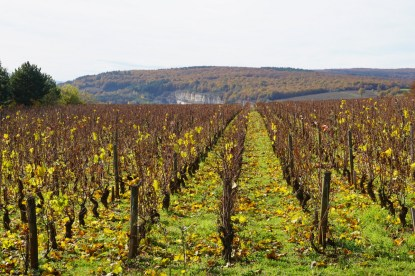 Chassagne in the distance...