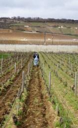 Ploughing in Vosne Clos d'Eugénie