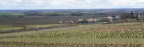Volnay Fremiets towards Clos des Angles