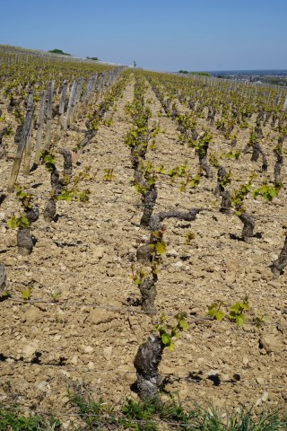 Over Clos des Chênes towards Volnay...