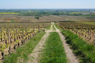 Looking down the centre of Clos des Chênes...