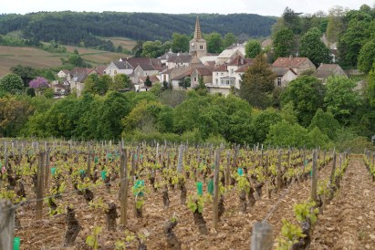 Pernand from the hill of Corton