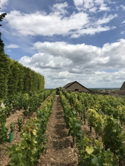 Clos Lambrays' Morey Villages