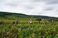 Faiveley in Chambolle Les Herbues