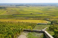 Looking down from upper Perrieres to the walled Clos des Perrières, Charmes below that...