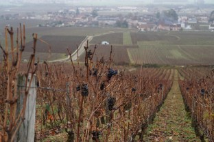 Vosne from Aux Champs Perdrix - below left Romanée-Conti after (half) ploughing