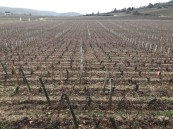 Chassagne-Montrachet Clos des Caillerets