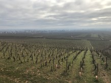 The view towards Puligny from La Cabotte