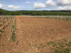 Drouhin-Laroze - marking out the ground