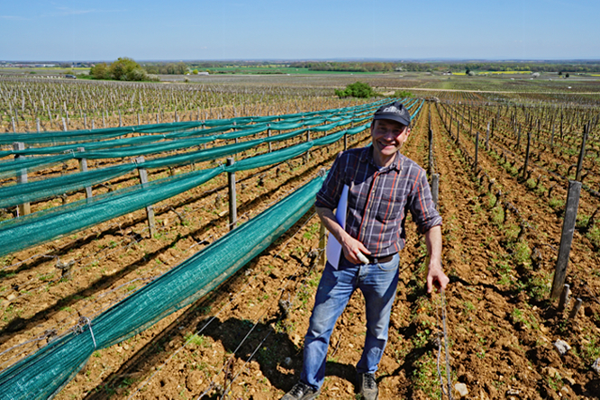 hail nets are finally allowed – almost… – Burgundy-Report