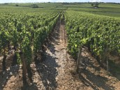 Dried mud in the bottom of Nuits 1er Aux Murgers