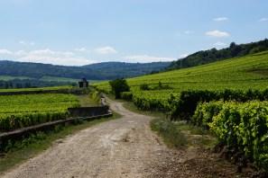 Vineyard road - 1ers above, villages below, towards Petit Auxey