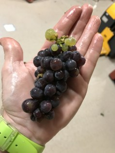 Pinot Beurot (Gris) - but why the white grapes? - sweet and ripe as they are....