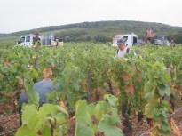 Camions-Porteurs-at-Charmes-Cham-Haut