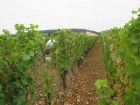 Morey-1er-Blanchards-row-towards-village