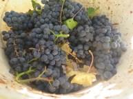 Morey Village fruit3 10092018