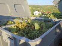 Hautes-Cotes Chardonnay Fruit 12092018
