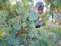 Ugo Hautes-Cotes Chardonnay 12092018