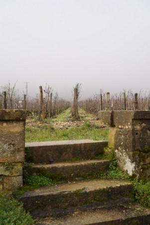 Into Romanée St.Vivant