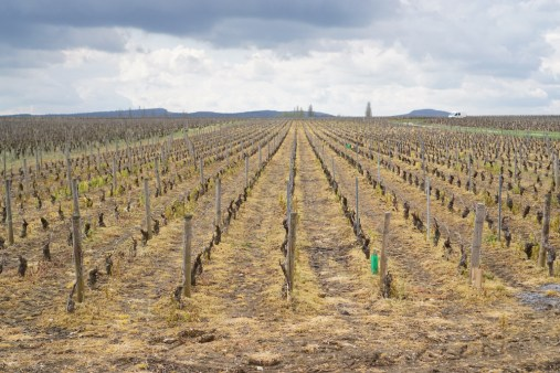 Herbicide - Puligny-Montrachet