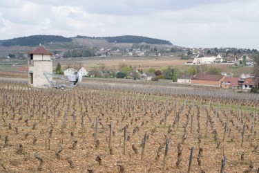 Meursault - Les Meix Chavaux - with anti-frost windmill