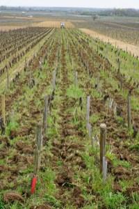 Ploughing Volnay Santenots de Dessous
