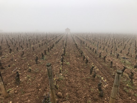 Top of Beaune Les Cents Vignes...