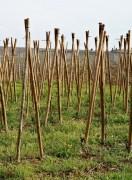 Clos des Grands Vignes