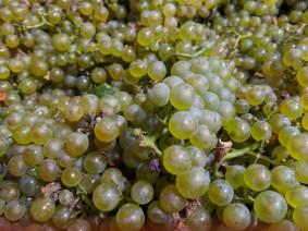 Bourgogne Blanc (de Chorey)
