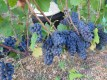 Noellat Chambolle Village Fruit