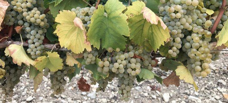 Chardonnay - Chabils Vaudésir, 2018